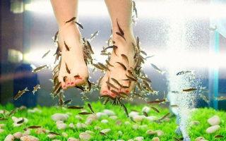 Пилинг ног рыбками: особенности и преимущества процедуры